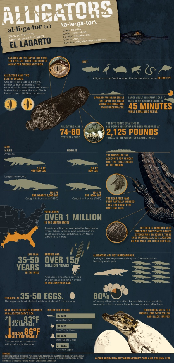 history-alligators